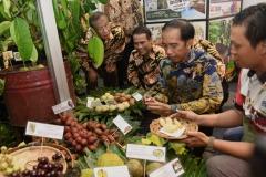 1536030512_Fruti_Indonesia